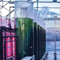 Danieli partners with Tolo to develop microalgae-based CO2 capture and reuse system